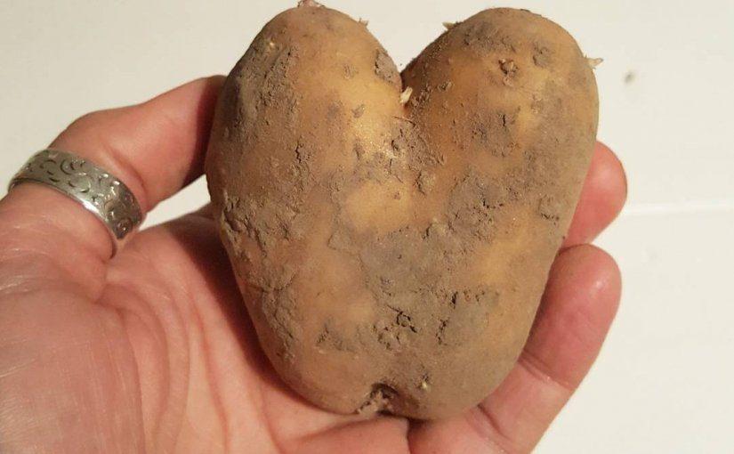 Waarom juist wel aardappelen eten?